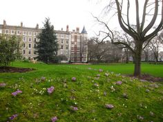 Inner Temple Gardens on Day 22's walk in London. Absolutely gorgeous!