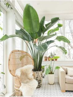 Best Indoor Plants Decor For Air Purify Apartment And Home 48