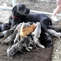 #dogs #cat