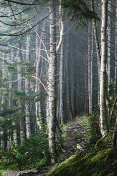 Nordic woodland and forests are just as beautiful in winter. We're adding them to our Nordic Christmas inspiration for Foggy Forest, Forest Path, Tree Forest, Forest Trail, Birch Forest, Birch Trees, Conifer Forest, Forest Road, Walk In The Woods