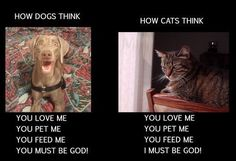 "How dogs think: ""You love me, you pet me, you feed me, you must be God! How cats think: ""You love me, you pet me, you feed me, I must be God!"""