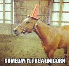 Funny Horse Memes (13 Pics)