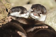 Month in animals: Cuddling otters | MNN - Mother Nature Network