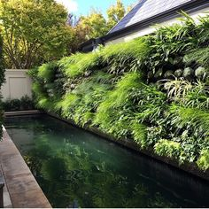 This vertical garden wall creates a most dramatic mood in the sexy black slate bottom pool.  @_vthome_