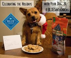 Celebrating the Holidays with your Dog & #BLUESantaSnacks #Sponsored
