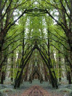 Belleek Castle Woods, Ireland photo via casey