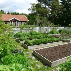 Mias Landliv: The garden at the end of May