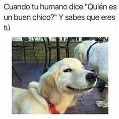 Imagenes de Humor #memes #chistes #chistesmalos #imagenesgraciosas #humor www.megamemeces.c... ☛☛ http://www.diverint.com/memes-divertidos-chilenos-mujer-vida
