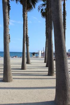 Beach Exploration, Barceloneta