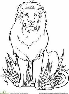 Kindergarten Animals Worksheets Lion Coloring Page