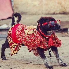#Repost @bshoka   When you know the meaning of life  Just Enjoy  #NEPAL #kathmandu #pashupatinath #temple #shivaratri #festival #sadhu #pet #nepalnow #nepal8thwonder #nepalphotoproject  #instagood #red #colors #photooftheday #canon #500px #weshootwithlove #whyilovektm #whyiloveNepal #nipec #atthekathmandu #ghumau_nepal #travel #photography #photo #streetphotography #dog #dogslife