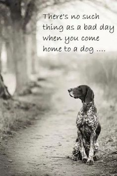 So true. My beautiful mini foxy is always a joy to come home to.
