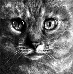 Drawing of a cat by Kate Powell Art