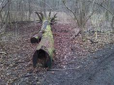 Am 16.01.2016 im Naturschutzgebiet Peißnitznordspitze: Totholz gehört zum Auenwald dazu und bietet vielen Tieren und Pflanzen Lebensraum.
