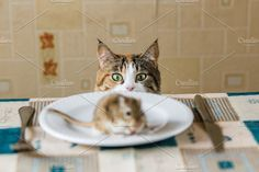 Cat looking to little gerbil mouse on the table before attack. Concept of prey, food, pest.. Animal Photos