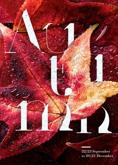 Four Seasons Typographic Posters