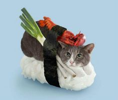 Sushi Cats! (And who thought of this, you might ask? Well, a Japanese peanut company, of course.)