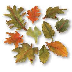 Sizzix Thinlits 10PK Leaves Woodland dies