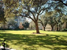 74 Best Tulane University Campus images