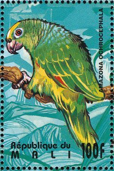 Yellow-crowned Amazon Postage Stamp