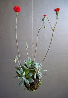 Beauty: Fedor van der Valk Discusses His String Gardens String Gardens by Fedor van der Valk via casasugar: Red Button flowers and succulents.String Gardens by Fedor van der Valk via casasugar: Red Button flowers and succulents. Air Plants, Garden Plants, Indoor Plants, House Plants, Ikebana, Art Floral Japonais, String Garden, Plantas Bonsai, Decoration Plante