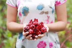 Quà Tết Hibiscus – Món Quà Cho Sức Khỏe Và Hạnh Phúc Blog, News, Blogging