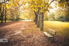 #Autumn Bench (Parco Talon - #Casalecchio - #Bologna ) by Luca Lorenzelli on 500px  #fall #seasonal #environment #emiliaromagna #october #september #leaf