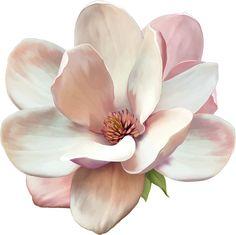 Magnolia tattoo, signe de respect et de fidélité dans la durée