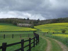 Horse Farm Heaven!