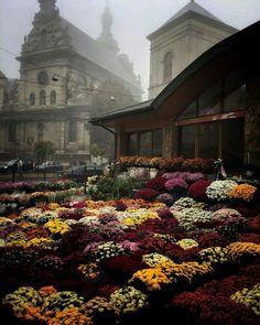 Wonderful Lviv