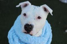 www.PetHarbor.com Animal Search: ALL