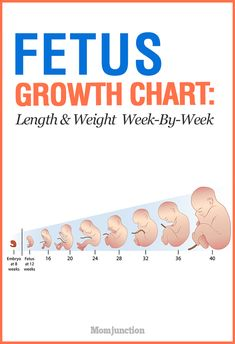 Growth Chart: Length And Weight Of The Fetus Week By Week