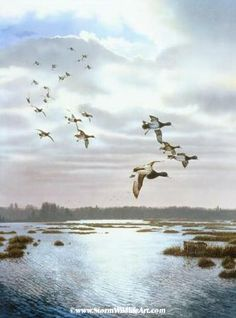 Waterfowl Paintings by Scot Storm 33