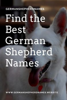 We have sorted a list of best german shepherd names in site for our fans