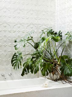 Bathroom. Raw pressed metal tiling and indoor plants fill this space. Photo – Annette O'Brien. Production – Lucy Feagins / The Design Files.