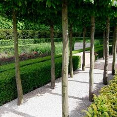 tree lined gravel walkway - love this