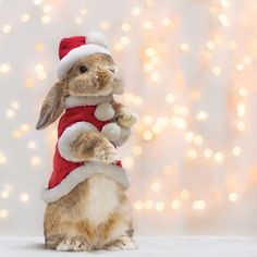 christmas eve * Christmas Eve Hope you all have an amazing Christmas * * Cute Baby Bunnies, Cute Baby Animals, Animals And Pets, Cute Babies, Christmas Bunny, Christmas Animals, Christmas Eve, Cute Bunny Pictures, Hamsters