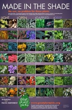 Shade garden plant picks - Click image to find more Gardening Pinterest pins