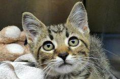 Fern A660862 Animals Pet Adoption Animal Shelter