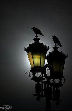 "seasonalwonderment: "" mistymorrning: "" (via (JPEG Image, 455 × 700 pixels)) "" Happy Halloween! City Photography, Animal Photography, Color Splash, Color Pop, Gothic Garden, Crows Ravens, Raven Art, Street Lamp, Great Photos"