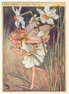 FLOWER FAIRIES 1940's: NARCISSUS. Only print. Artist: Cicely BARKER.