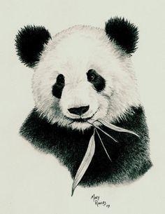 Panda graphite pencil drawing