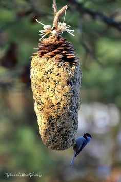 Rebecca's Bird Gardens: DIY Giant Sugar Pinecone Suet Feeder