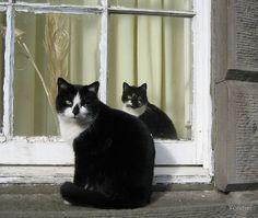 Gatos pela janela
