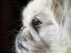 Chyna Extreme Close-Up by Steven Sobel, via Flickr