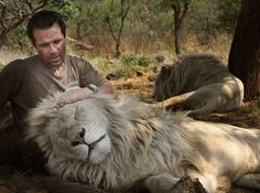 """Kevin Richardson plays with white lions protecting them from so called """"hunters"""" that kill thousands of lions in South Africa"""
