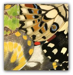 #butterfly #wing Natalia Edenmont