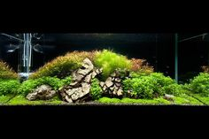 Favourites: display tank by ADA Polska The rocks that these guys have are just some of the most beautiful around Europe. Stunning textures in this tank!