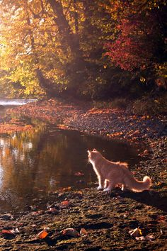 Do you love cats? If so how many cats do you have? Many cats love their owners just as much, Warrior Cats, Crazy Cat Lady, Crazy Cats, Animals And Pets, Cute Animals, Autumn Aesthetic, Tier Fotos, Ginger Cats, Beautiful Cats