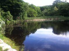 Millbrook Pond Rockport , Ma